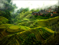 Guilin Tea Fields